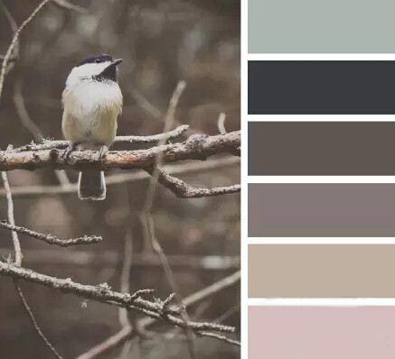 鸽灰色.jpg