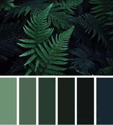 松柏绿色.jpg